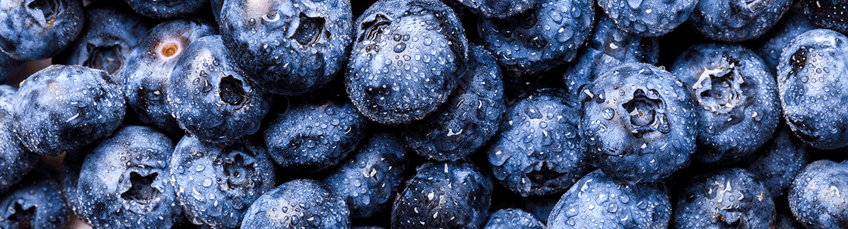 berries Antioxidant properties