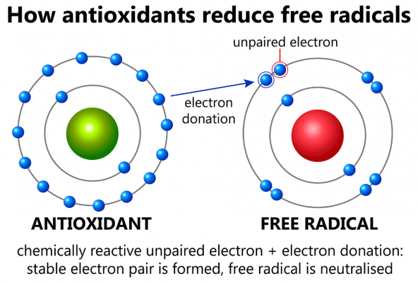 How Antioxidants reduce free radicals